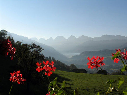 Calendar Photography of Switzerland red flowers and mountains by Tom Bochsler BP imaging